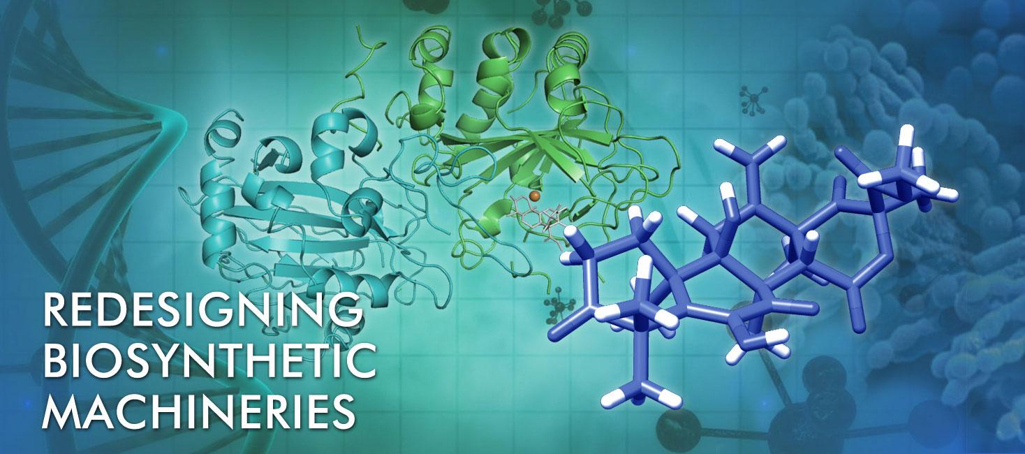 生合成系の再設計による複雑骨格機能分子の革新的創成科学