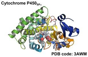 http://bioinorg.chem.nagoya-u.ac.jp/P450SPa_web.jpg